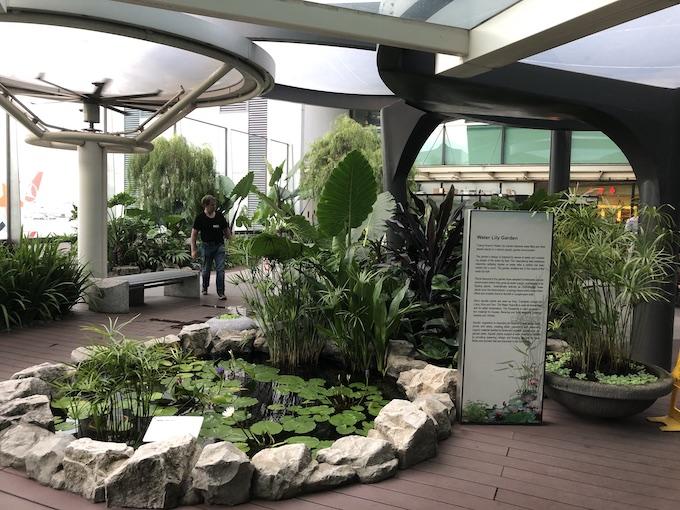 シンガポール空港 ウォーターリリーガーデン